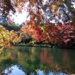 紅葉の名所、軽井沢の雲場池が素敵でした